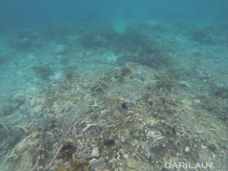 Terumbu karang di depan Pulau Popaya yang hancur akibat aktifitas pengeboman ikan oleh nelayan. FOTO: CHRISTOPEL PAINO
