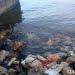 Sampah plastik di pinggiran pantai. FOTO: DARILAUT.ID