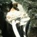 Bangkai mamalia laut yang terdampar di Pulau Imana, Nias Barat, memiliki tanduk. FOTO: DOK. BPSPL PADANG