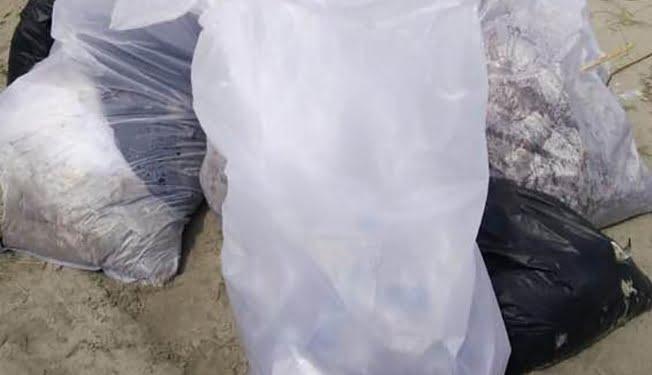 Sampah plastik yang diangkat dan dikumpul dimasukan dalam karung, kemudian dibawa ke tempat pembuangan sampah. FOTO: DOK RENALD YUDE