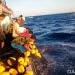 Daya beli nelayan pada Juni 2018 membaik. FOTO: DARILAUT.ID