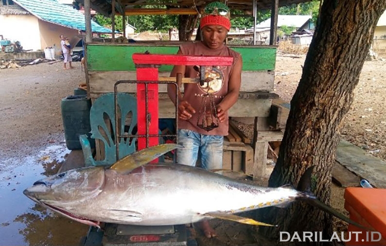 Tangkapan tuna di perairan Gorontalo, Teluk Tomini. FOTO: DARILAUT.ID
