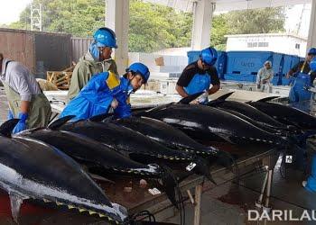 Budidaya bluefins tuna di Jepang. FOTO: DONNA OCTAVIANA