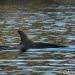 J50. FOTO: NOAA Fisheries