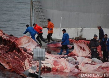 FOTO: TRIANGLE NEWS/SEA SHEPHERD