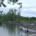 Cagar Alam Tanjung Panjang yang  dialihfungsikan sebagai areal tambak di Kabupaten Pohuwato, Provinsi Gorontalo. FOTO: DOK. SUSCLAM