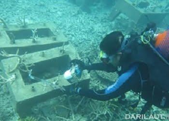 Transplantasi karang di Pulau Nyamuk, Anambas. FOTO: DOK.IPB.AC.ID