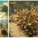 Pertumbuhan fragmen karang Acropora pada terumbu buatan APR (Artificial Patch Reef) di Pulau Panjang, Jawa Tengah (Munasik et al., 2017).