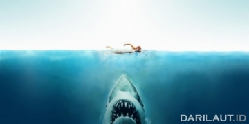 Film Jaws. FOTO: SLASHFILM.COM