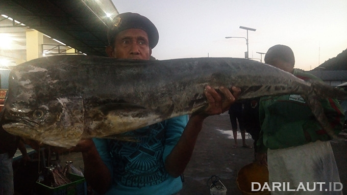 Common dolphinfish, Lemadang. FOTO: DARILAUT.ID