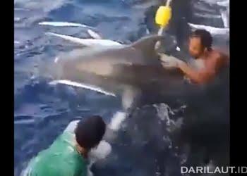 Nelayan Indonesia di Wilayah Pengelolaan Perikanan 711 melepas lima lumba-lumba hidung botol yang masuk jaring.