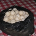Telur penyu. FOTO: DOK. WWF-INDONESIA