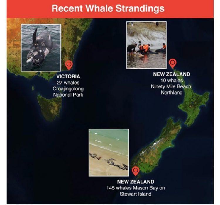Paus mati terdampar