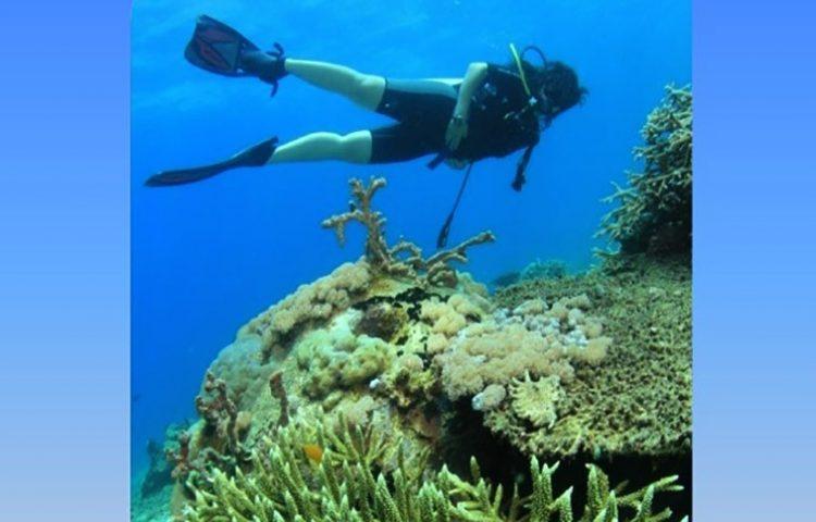 Transplantasi karang