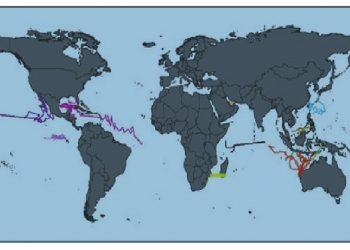 Ruaya hiu paus di perairan dunia.