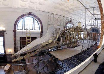 kerangka paus sperma di Museum Manila