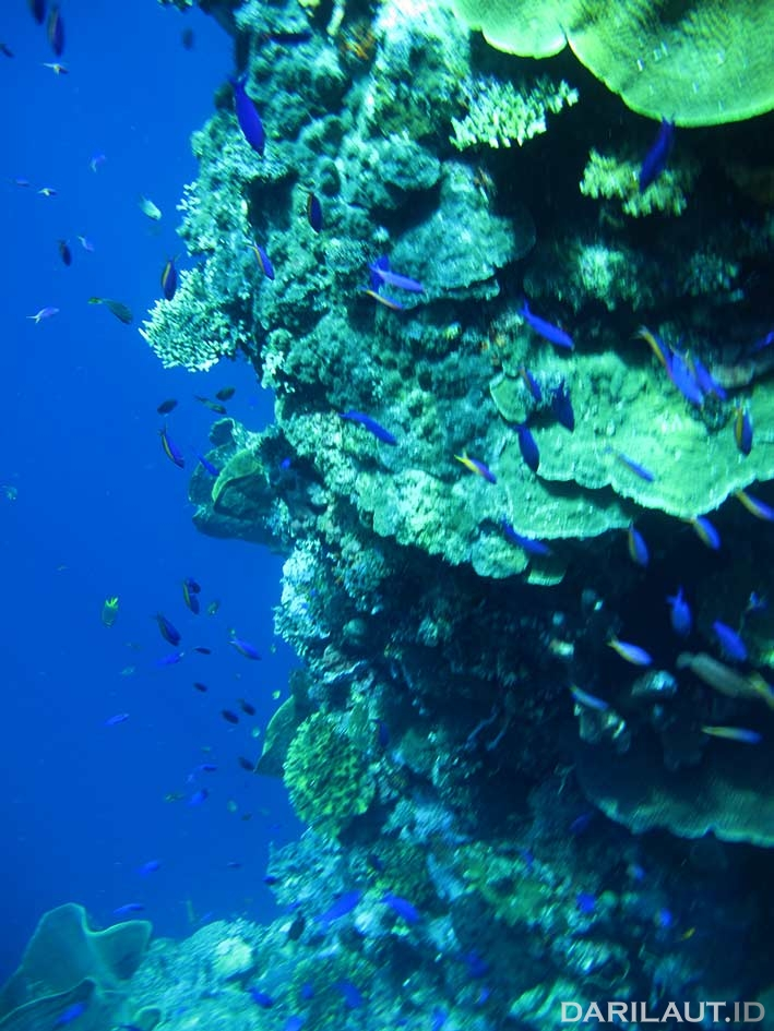 Kawasan Konservasi Laut