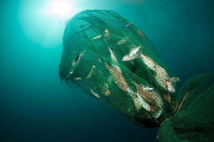 FOTO: WWF INDONESIA
