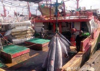 Hasil tangkapan ikan dan awak kapal perikanan di Pelabuhan Benoa, Bali. FOTO: DARILAUT.ID