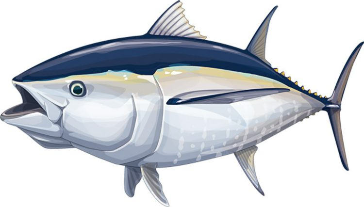 Tuna sirip biru. PEWTRUSTS.ORG