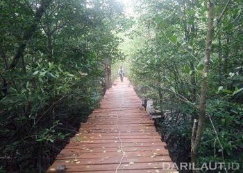 Tracking mangrove di Pulau Sebatik, perbatasan Indonesia dan Malaysia. FOTO: DARILAUT.ID