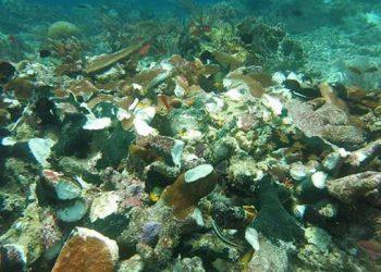 Terumbu karang yang rusak akibat kandasnya kapal Caledonian Sky di Kawasan Konservasi Perairan Raja Ampat Papua Barat, Sabtu, 4 Maret 2017. FOTO: DOK. MARITIM.GO.ID