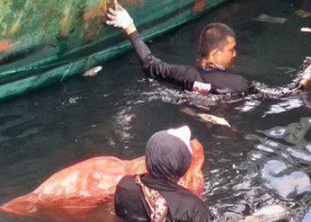 Sebanyak 1,5 ton (1.572 kilogram) berbagai jenis sampah diangkat dalam kegiatan bersih pantai dan laut yang dipusatkan di Pelabuhan Perikanan Pantai (PPP) Tumumpa di Manado, Sulawesi Utara, Minggu (18/8). FOTO: DOK. ISTIMEWA