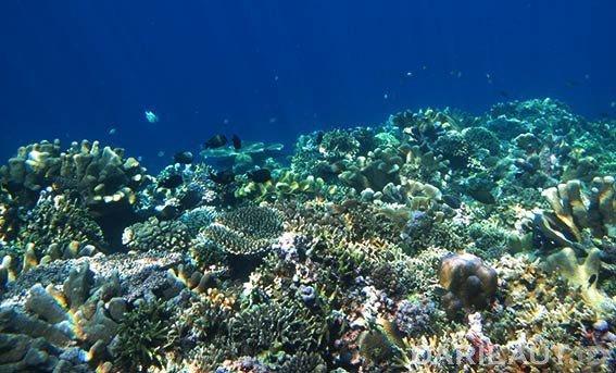 Ekosistem terumbu karang. FOTO: DARILAUT.ID