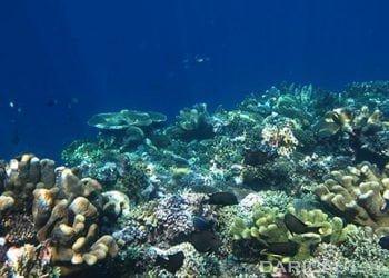 Terumbu karang. FOTO: DARILAUT.ID