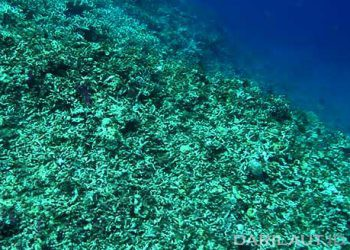 Terumbu karang yang hancur akibat praktik penangkapan ikan yang merusak (destructive fishing) dengan menggunakan bom rakitan. FOTO: DARILAUT.ID