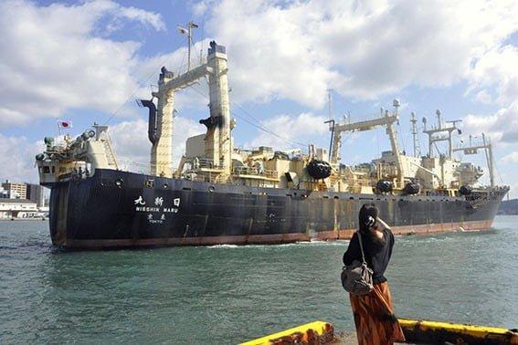 Jumat (4/10) 1 dari 2 kapal penangkap paus Jepang Nisshin Maru kembali ke pelabuhan asal Shomonoseki, Jepang, setelah perburuan paus secara komersial untuk pertama kalinya dalam 31 tahun. FOTO: KYODO NEWS VIA AP/SEATTLETIMES.COM