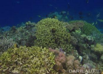 Terumbu karang dan keanekaragaman jenis ikan di Togean. FOTO: DARILAUT.ID
