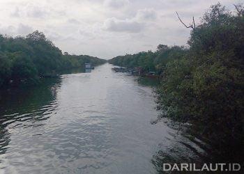 Nelayan Desa Ujungmanik, Kawunganten, Kabupaten Cilacap, Jawa Tengah meminta mangrove di alur sungai kiri dan kanan hingga 100 meter tidak ditebang untuk perluasan tambak. FOTO: DARILAUT.ID
