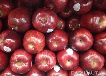 Buah apel. FOTO: DARILAUT.ID