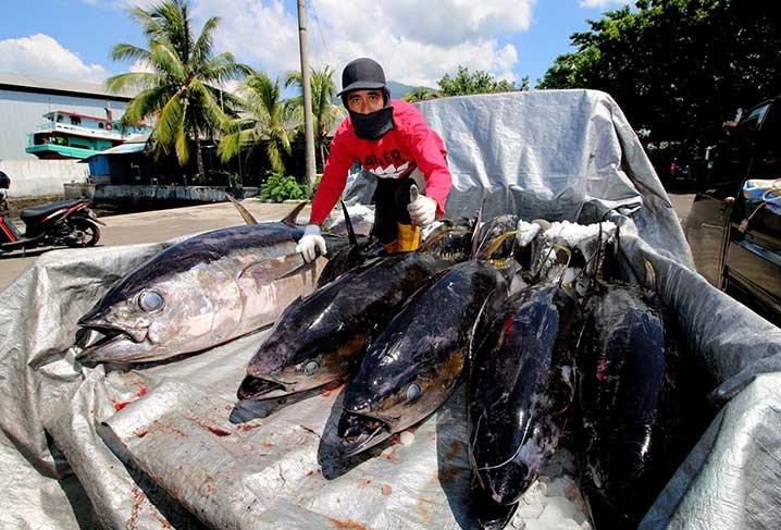 Madidihang atau tuna sirip kuning (Yellow fin tuna) di Bitung, Sulawesi Utara. FOTO: TWITTER/PPS BITUNG