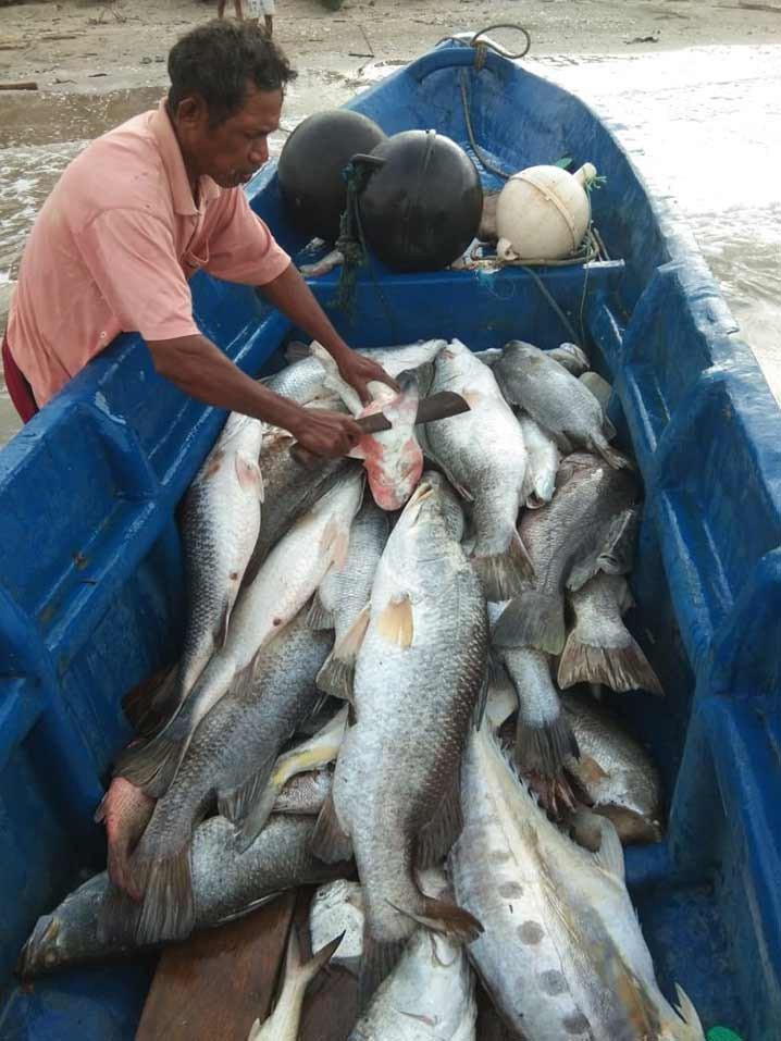 Ikan hasil tangkapan nelayan kecil di Desa Makatian, Kabupaten Kepulauan Tanimbar, Provinsi Maluku tidak lagi terserap di pasaran. FOTO: DOK. ISTIMEWA