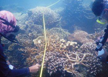Survei penyakit karang di Taman Nasional Karimunjawa. FOTO: KSDAE/KLHK