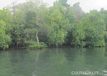 Ekosistem mangrove berkontribusi dalam mengurangi emisi karbon, jika dijaga dan dilindungi. FOTO: DARILAUT.ID