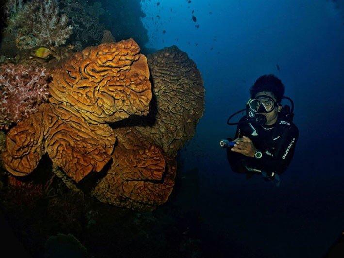 Bunga karang raksasa, Salvador Dali, di perairan Olele Bone Bolango, Gorontalo. FOTO: YUNIS AMU