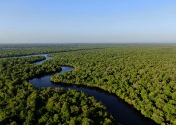 Area mangrove di Kabupaten Bengkalis. Kota Dumai dan Kabupaten Bengkalis adalah dua lokasi kerja MERA di Provinsi Riau. FOTO: DHIKA RINO PRATAMA/YKAN