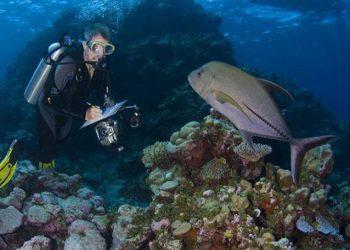Survei ikan karang dan terumbu karang di Halmahera. FOTO: DOK. GR ALLEN