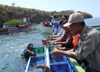 Panen teripang di Lombok Timur. FOTO: LIPI
