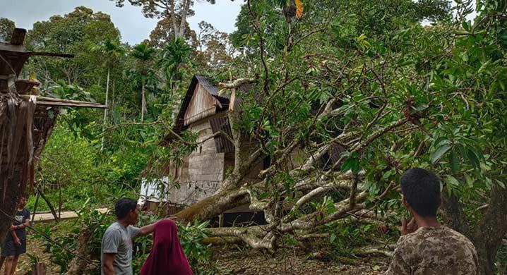 Kondisi Pohon Tumbang Akibat Angin Kencang di Kabupaten Aceh Selatan. FOTO: BPBD Aceh Selatan/BNPB