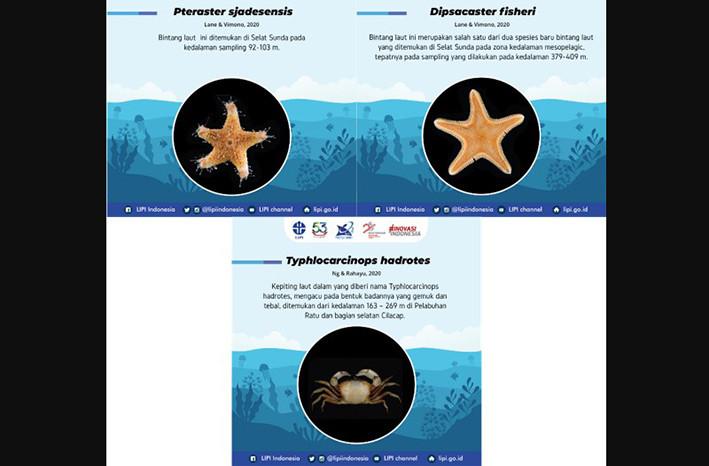Spesies baru bintang laut dan kepiting. DESKRIPSI GAMBAR: P2O-LIPI