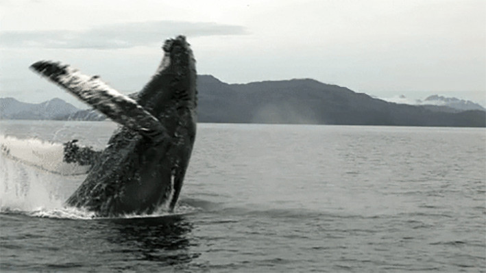 FOTO: WHALE SCIENTISTS