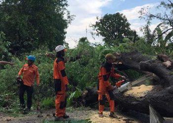 Penanganan darurat setelah angin kencang yang terjadi pada Senin lalu (9/11) di kabupaten Maros. FOTO: BPBD Kabupaten Maros/BNPB