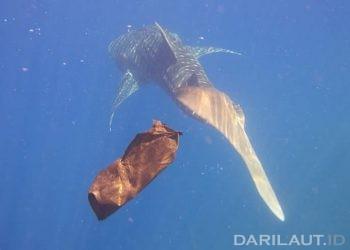 Buangan berbagai kemasan plastik masih menjadi permasalahan utama pencemaran di laut. FOTO: DARILAUT.ID