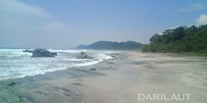 Vegetasi tanaman pantai dapat mereduksi tsunami di Pulau Nusakambangan, Cilacap, Jawa Tengah. FOTO: DARILAUT.ID