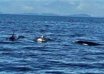 Paos orca yang terlihat di Pulau Sipadan, Malaysia. FOTO: AFAT ABDURAHIM