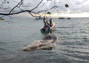 Seekor paus dengan kondisi tubuh yang sudah rusak dan membusuk ditemukan di Pantai Liang, Pulau Bunakan, kawasan Taman Nasional (TN) Bunaken, Jumat (29/1). FOTO: KSDAE